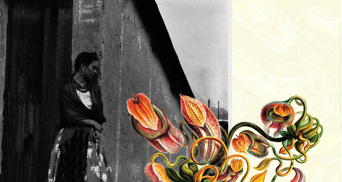 De Frida Kahlo à Donzela Guerreira