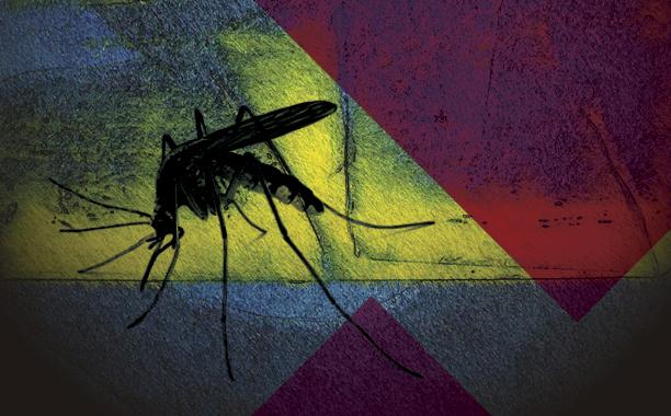 O Zika e o aborto da política brasileira