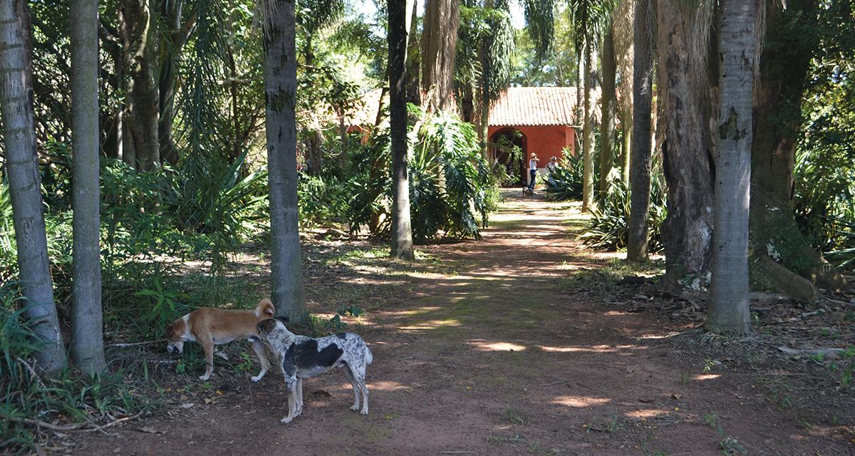 Jardim da Casa do Sol, cujo paisagismo foi feito por Mora Fuentes nos anos 1980 (Foto Helder Ferreira)