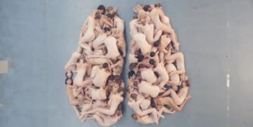 Imagem do cérebro humano criada pela Dutch National Ballet para o TEDxAmsterdam, em 2011 (Reprodução)