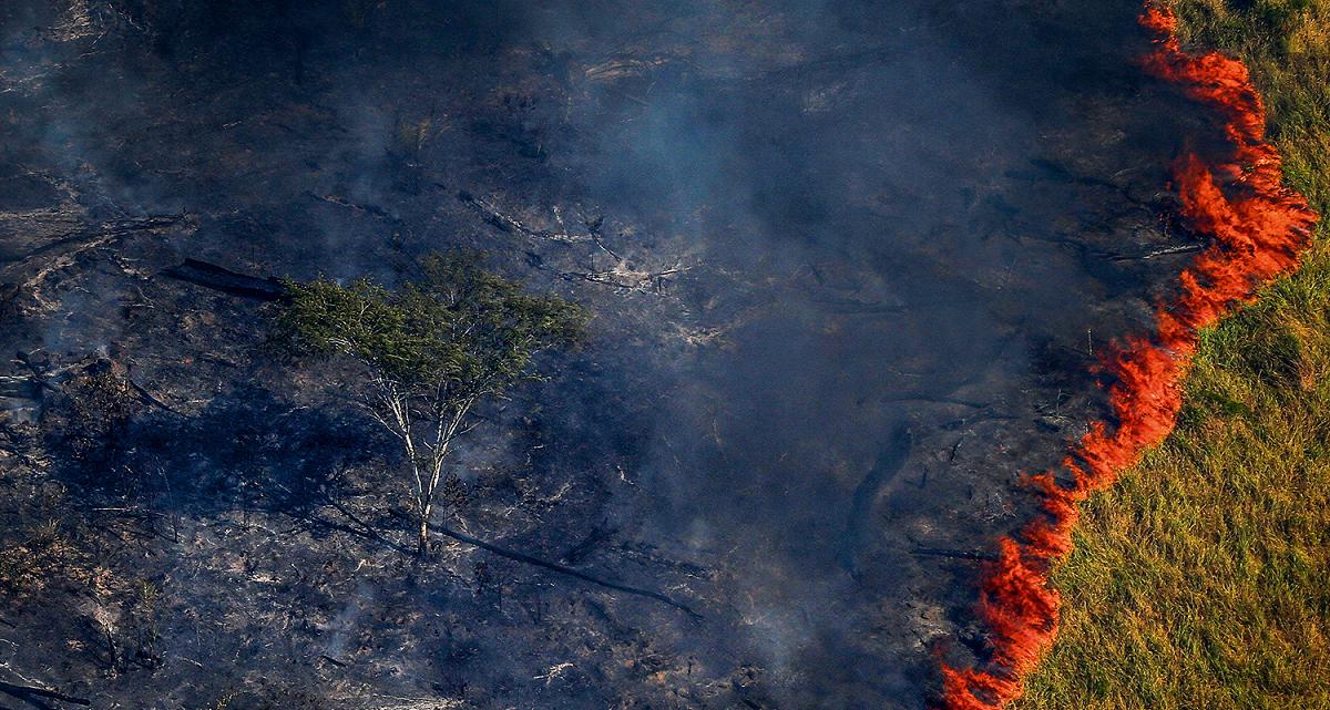 Bolsonaro em chamas
