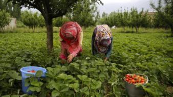TRabalhadoras campos de morango Huelvia (Foto: EFE)