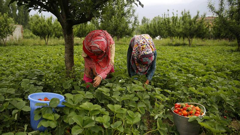 Abuso, chantagem, falta de direitos: bem-vindos à horta da Europa